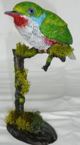 Todus multicolor 09