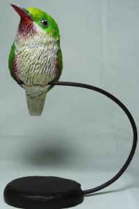 Todus subulatus nº1-01